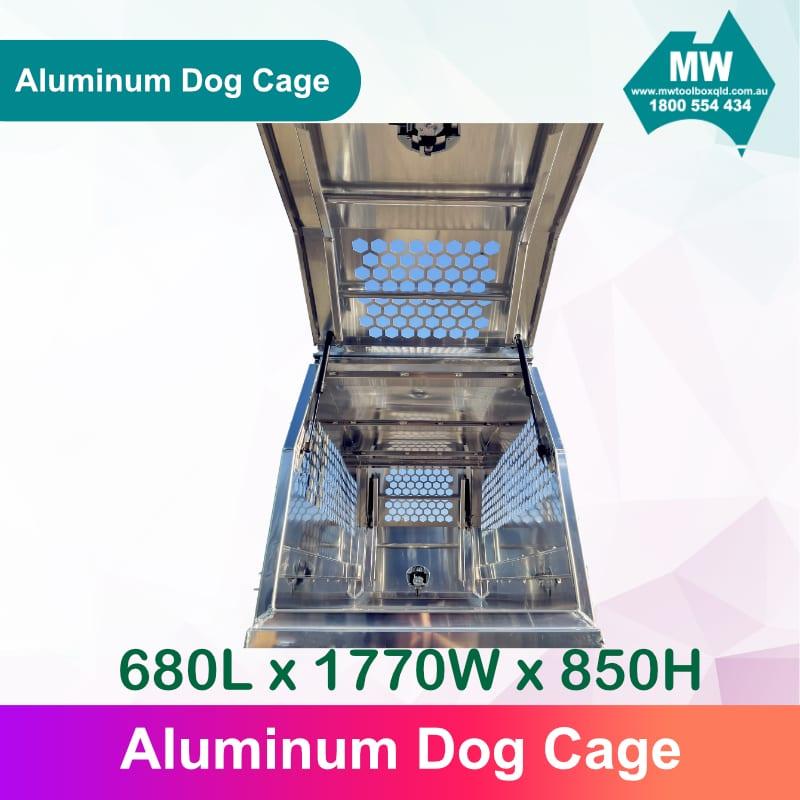 DOG Box 6